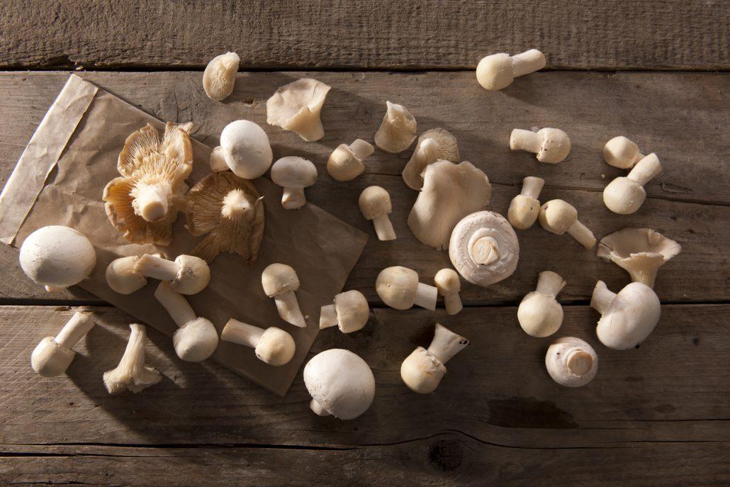 champignon workshop la cucina del sole amsterdam
